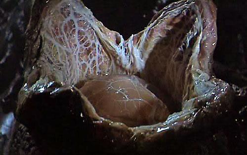 Alien-ovomorph-2.jpg