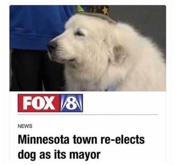 dog-elected-its-mayor-in-Minnesota.jpg
