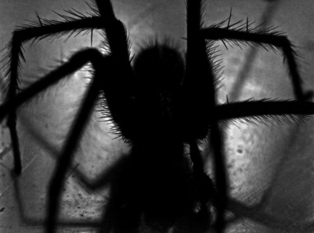 silueta-de-araña.jpg