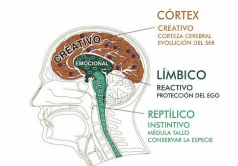 Tipos-de-cerebro.jpg