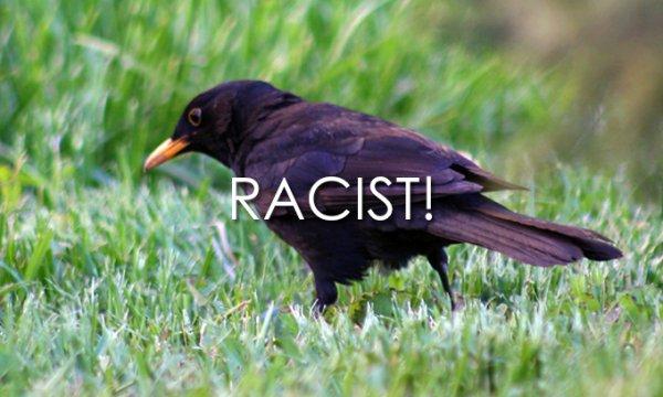 Racist-bird.jpg